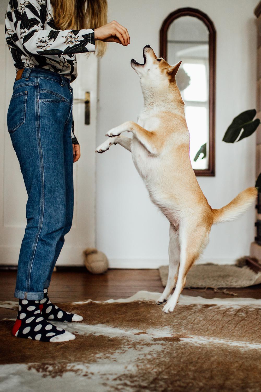 Hundeshooting Julie und Frida-2156_WEB.jpg